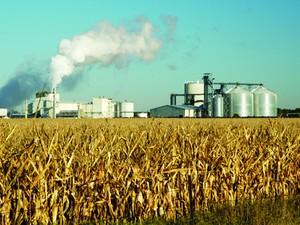 Produção de milho para biocombustível(Foto: Divulgação/Universidade de Illinois)