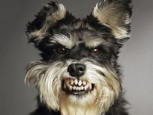 cachorro-com-raiva-5f0261