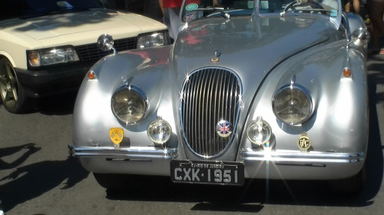 Imponente Jaguar
